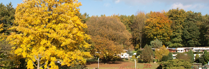 Herbst_720x240px